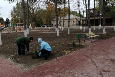 В парке «Молодежном» станицы Камышеватской высадили 20 кустов можжевельника