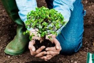 Почти 4 тысячи саженцев деревьев, кустов и клубней цветов высажено в осенний период на территории Ейского района