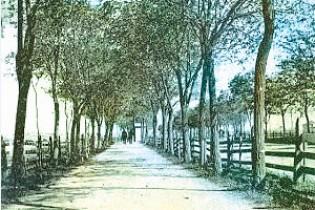 170 лет Воронцовскому проспекту. Или как в Ейске высаживали сады (Часть1)