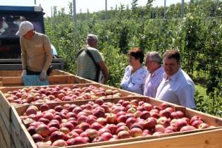Сегодня Юрий Келембет посетил ООО «Плодовое», одно из крупнейших хозяйств России